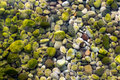 Stones Under Water with Moss Royalty Free Stock Photo