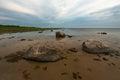 Stony beach in estonia by baltic sea Stock Photography
