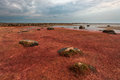 Stony beach in estonia by baltic sea Royalty Free Stock Images