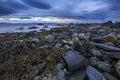 Stony shoreline with seaweed Royalty Free Stock Photo