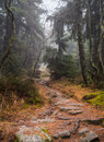Stony trail food path leading through a gloomy forest Stock Image