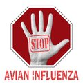 Stop avian influenza conceptual illustration Royalty Free Stock Photo