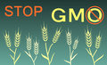 Stop gmo banner vector illustration Royalty Free Stock Images