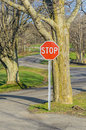 Stop sign among bare trees in springtime Royalty Free Stock Photos