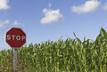 Stop sign in a green grass against blue sky with white clouds and Stock Photography