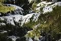 Stora filialer många snow den spruce treen Arkivfoton