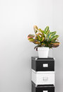 Storage boxes and green plant in a room corner Stock Photography