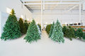 Storage room with rows of artificial christmas trees and fairy lights on shelves Stock Image