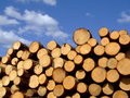 Stored timber the wood at each other in a pile Royalty Free Stock Photography