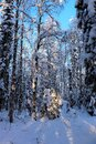 Beautiful Winter Day In Storforsen Nature Reserve