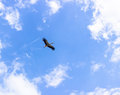 Stork and airplane on cloudy sky Royalty Free Stock Photography