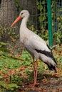 Stork Bird In A Zoo