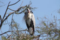 Stork on branch of a tree Royalty Free Stock Photo