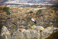 Stork on a Cliff at Western Coast of Portugal Royalty Free Stock Photography