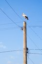 Stork on electricity pole Royalty Free Stock Photo