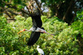 Stork in flight a painted Royalty Free Stock Images