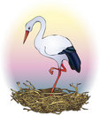 Stork in the nest Royalty Free Stock Photography