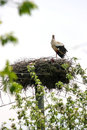 Stork in nest Royalty Free Stock Photo