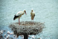 Stork nest a couple of white storks remain on the top of its Royalty Free Stock Photos