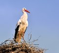 Stork in the nest III Royalty Free Stock Images