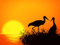 Stork nest illustration of silhouette over sunset Royalty Free Stock Image