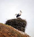 Stork in the nest on the roof of an old house Stock Photography