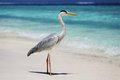 Stork on the ocean coast Royalty Free Stock Photography