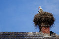 Stork in a s nest in alsace Royalty Free Stock Photo