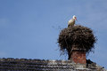 Stork in a s nest in alsace Royalty Free Stock Images