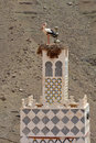 Stork s nest on the top of a minaret morocco Royalty Free Stock Images