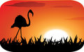 Stork with sunset silhouette background Royalty Free Stock Image