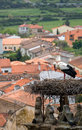 Stork in trujillo extremedura spain nesting on a high tower the historic town of extremadura Royalty Free Stock Images