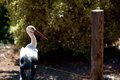 Stork in zoo white cyprus Royalty Free Stock Images