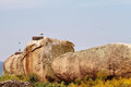 Storks above the rocks in barruecos natural monument extremadura spain Stock Photos