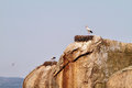 Storks above the rocks in barruecos natural monument extremadura spain Stock Images