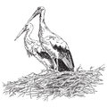 Storks couple in the nest vector illustratoin