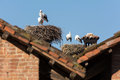 Storks families of adults who have nested on roofs Royalty Free Stock Image
