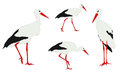 Storks illustration walkin and standing Stock Photos