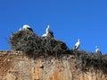 Storks in the necropolis of chellah rabat morocco Stock Photo