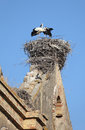 Storks nest Royalty Free Stock Images