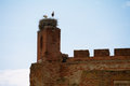Storks in a nest at red bricks roof ruins Stock Photos
