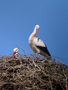 Storks in a nest under blue sky Royalty Free Stock Photography