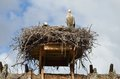 Storks nest the white stork was one of the many bird species originally described by linnaeus in the landmark Royalty Free Stock Photos