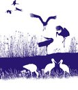 Storks on the shore isolated illustration of a flock of Stock Photo