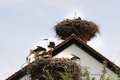 Storks in their nest young nests on the top of a roof Royalty Free Stock Photos