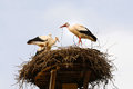 Storks in their nest young a on the top of a roof Stock Image