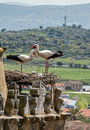 Storks in trujillo extremedura spain two nesting on a high tower the historic town of extremadura Royalty Free Stock Image