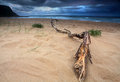 Storm clouds building up over the sea life is not always sunshine and roses heavy driftwood washed ashore in foreground Stock Images