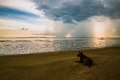 Storm clouds sea and dog sitting on the beach Royalty Free Stock Photos