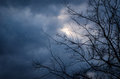 Storm clouds with tree bough Royalty Free Stock Photo